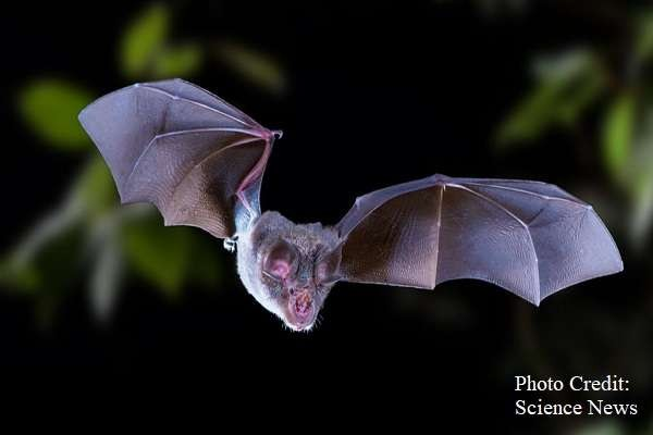 An Oxford study from May 2020 shows scientist found no evidence of bats or pangolins being kept at wet markets in Wuhan prior to the COVID-19 pandemic. Over 50,000 animal trades were looked ..